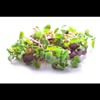 GROW GREENS MUSTARD MICROGREENS BOX