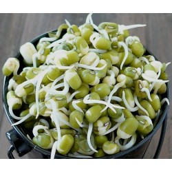 GREEN GRAM SPROUTS 300G