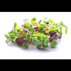 GROW GREENS HEALTH MIX MICROGREENS BOX